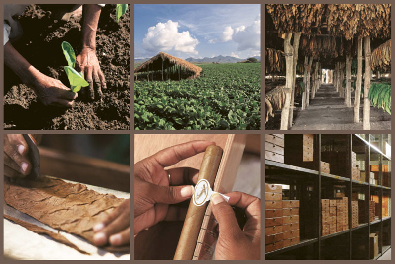 davidoff-cigars-know-how