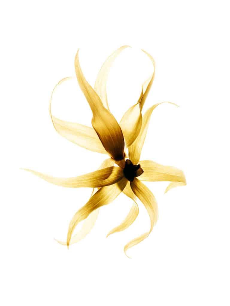 Gabrielle-Chanel-Ylang-ylang