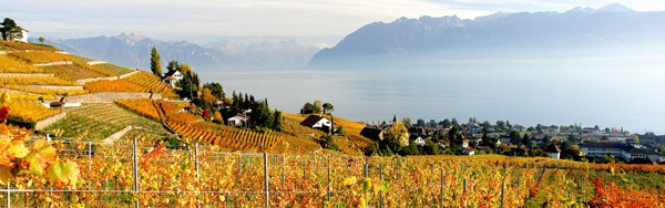 Office-Vins-Vaudois-landscape-autumn