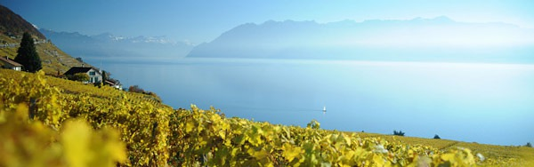 Office-Vins-Vaudois-landscape-lake-vines