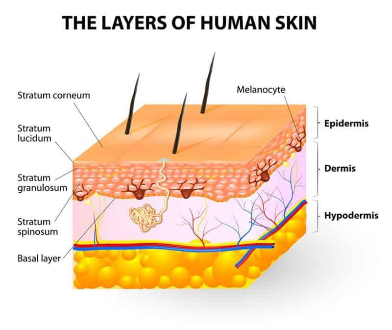 Skin-Layers