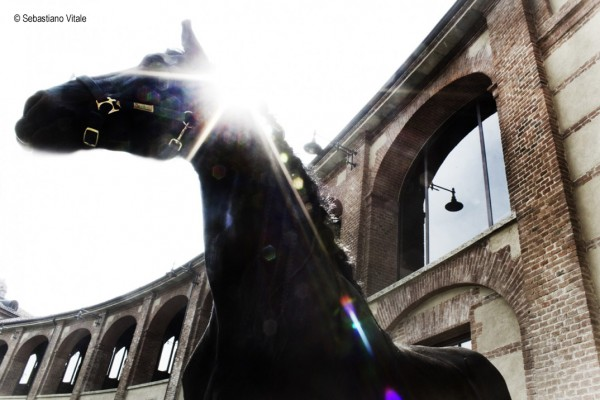 The-Raw-Project-Sebastiano-Vitale-Black-horse