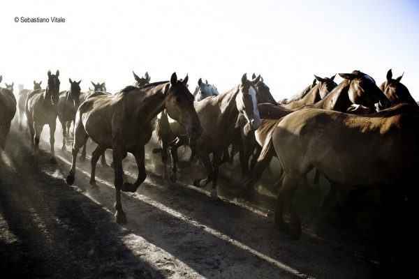 The-Raw-Project-Sebastiano-Vitale-Group-of-horses-ride