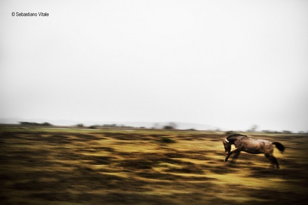 The-Raw-Project-Sebastiano-Vitale-Impressions-Horse