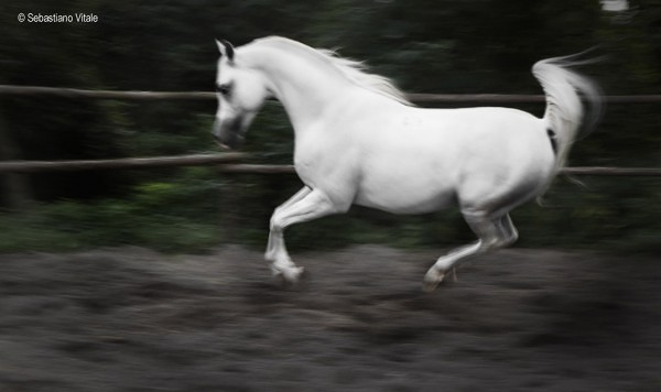 The-Raw-Project-Sebastiano-Vitale-White-horse