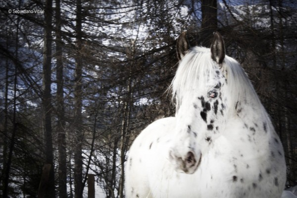 The-Raw-Project-Sebastiano-Vitale-White-horse-snow