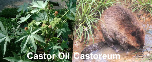 Castor oil and Castoreum are 2 different things. Really!