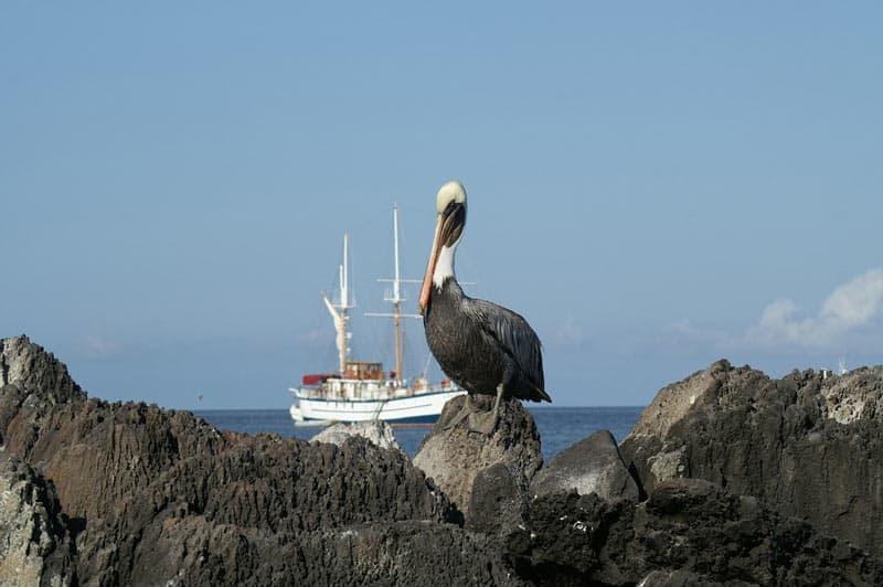 Galapagos-boats