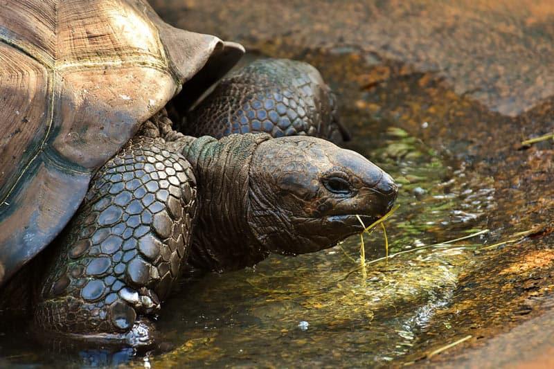 Galapagos-turtles