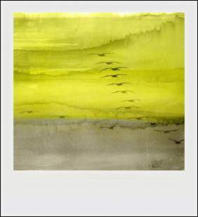 Parvez Taj Polaroids yellow